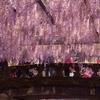 まるで紫色のシャワー #2