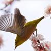 梅の花咲く頃 5