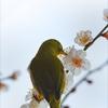 梅の花咲く頃 1