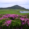 初夏を彩るミヤマキリシマ   1
