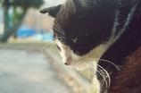 悲しげなシロクロ猫