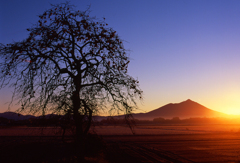紫峰の朝日