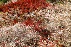 秋と春のハーモニー