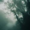 魔女の住む森