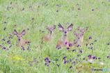 草原に咲く