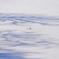 雪影を歩む