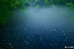 朝靄の青池