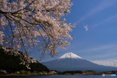 富士と桜の春