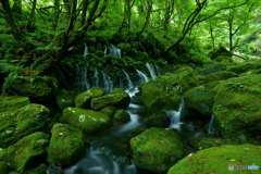 緑と水の楽園
