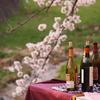 Cherry & wine