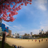 春色の公園