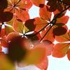 高原は秋の気配④