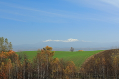 冠雪と黄葉の丘
