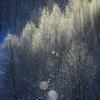 樹氷と氷塵