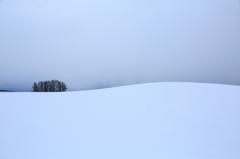 冬を報せる彩