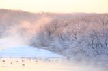 雪裡川の朝