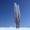 赤羽の丘~樹氷舞い落ちる