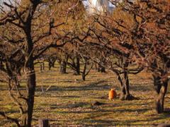 梅の木と猫