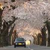 桜並木とcopen
