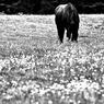 牧草を頬張る姿