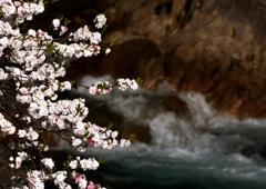 花桃の里 1