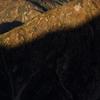 奥大日岳 光と影
