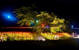 彼岸花の里徳山 ライトアップ
