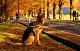 犬も愛でる紅葉並木