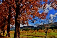 初冬のマキノ高原