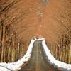 冬の並木トンネル