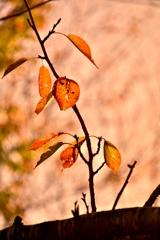虫食いの秋