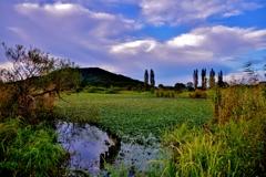 水草に覆われる野田沼