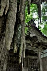 大杉神社の乳柱