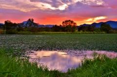 水草に覆われた野田沼の夜明け