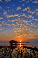 琵琶湖霜月夕日