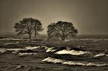 冬紀行・荒ぶる琵琶の湖