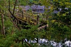 朽ちた木造橋