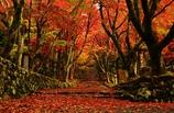 秋彩の鶏足寺