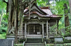 大杉神社と大公孫樹