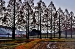 冬枯れ並木のシルエット