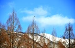 春へ続くメタセコイア並木 Ⅴ