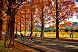 駆ける紅葉並木道