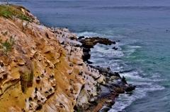 断崖の鳥の楽園