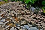 穴だらけの川原