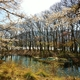 奥琵琶湖・水辺の風景