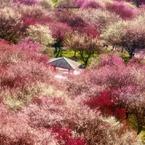 NIKON NIKON D600で撮影した(梅の宴)の写真(画像)