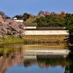 NIKON NIKON D800で撮影した(彦根城春景色)の写真(画像)