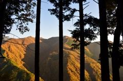樹陰の山紅葉