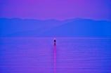 湖上の灯り