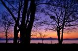 夜明けの樹影